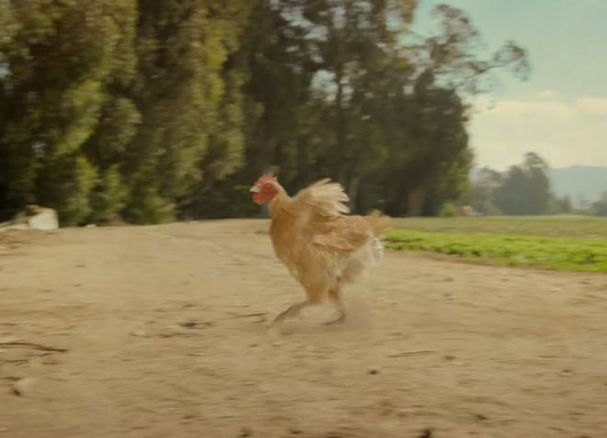 Chicken goes truly free range in new Reebok ad