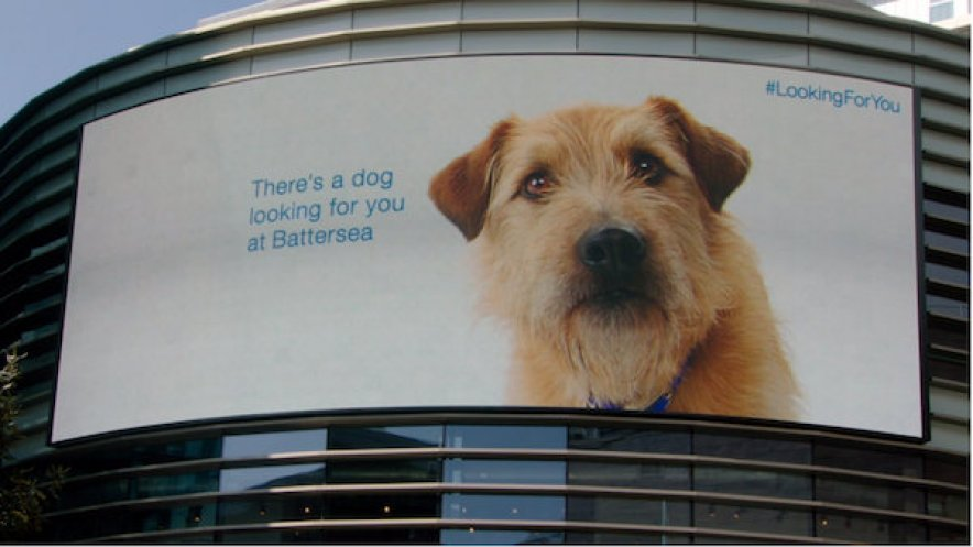 A clever ad for Battersea Dogs & Cats Home