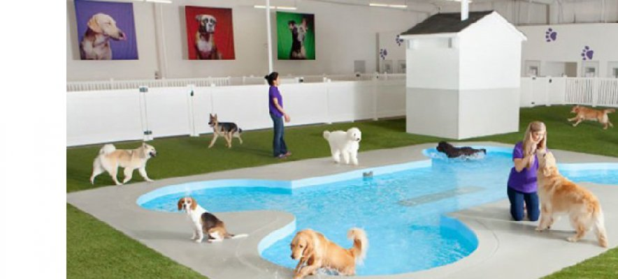 A Gensler-designed pet pampering centre
